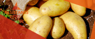 are potatoes good for you